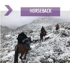 horsebackbtn-04