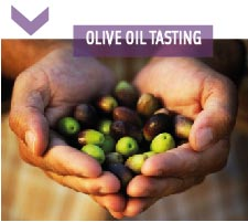 oliveoil-05